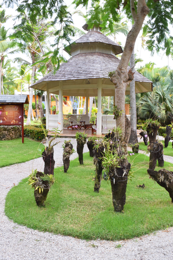 Escape to the IBEROSTAR Bavaro's beautifully manicured orchid garden for some overdue me-time.