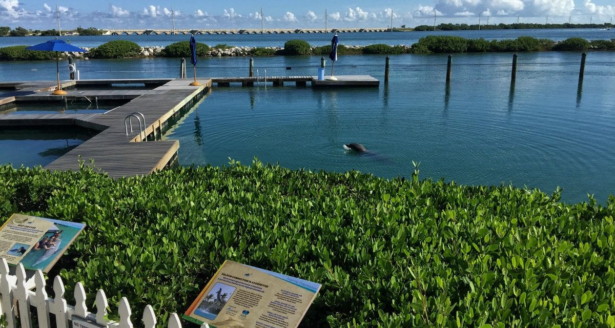 Spa, Sports and Dolphins at Hawks Cay Resort