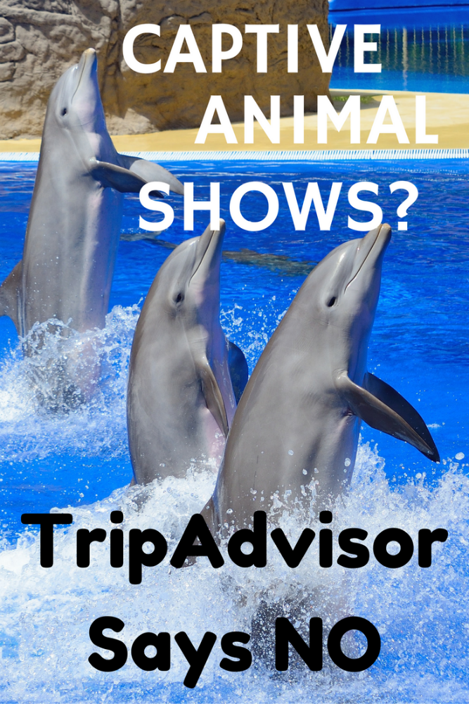 how will trip advisor new policy affect tourists