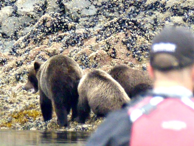 do you see bears cruising alaska on a small cruise ship and what are advantages of small ship cruising
