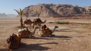 Travel to Jordan twice to open new skills in exploring desert on camels.