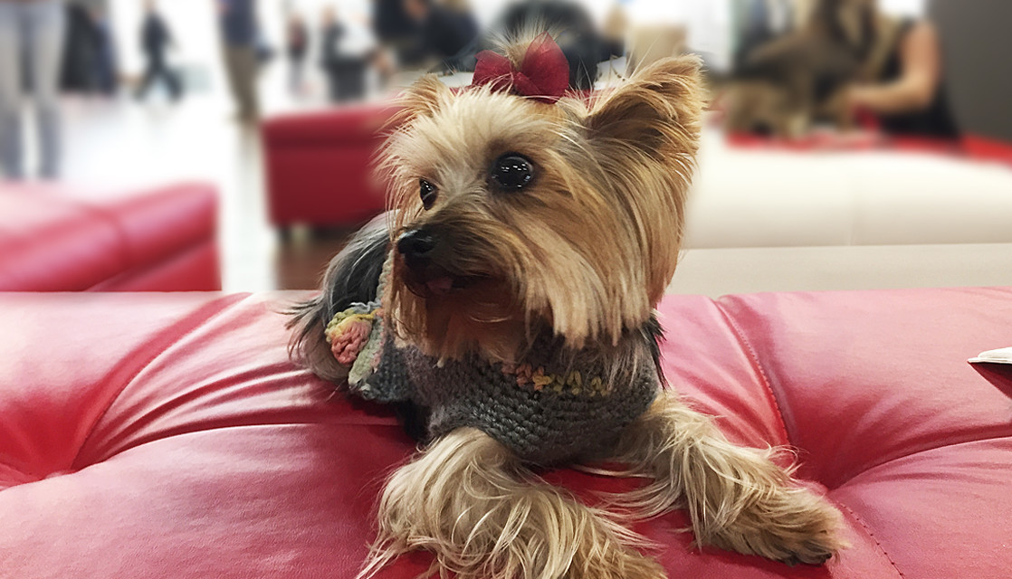 Want to Bring Fido or Fluffy Along? Tips for Traveling with Pets