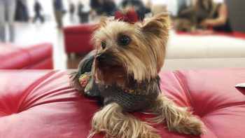 Traveling with your pet can be a special bonding experience or a disaster. Careful planning is key. Here are my tips for traveling with pets.