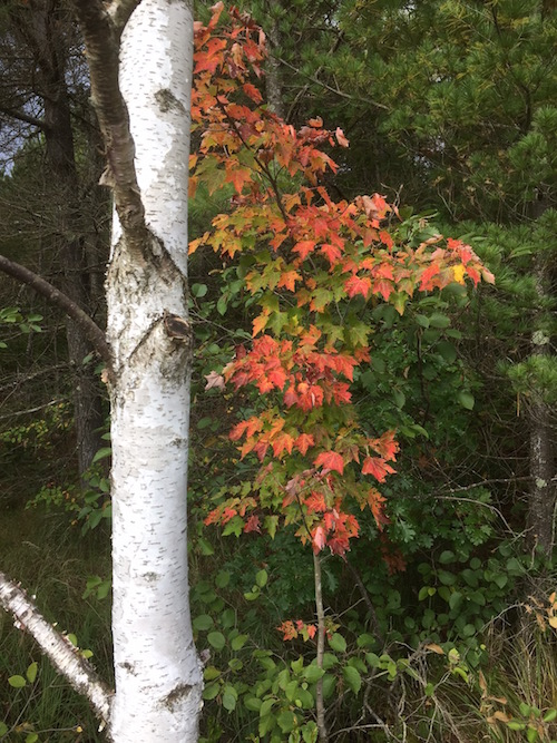 Colors vary seasonally in the Northwoods forests of Wisconsin.