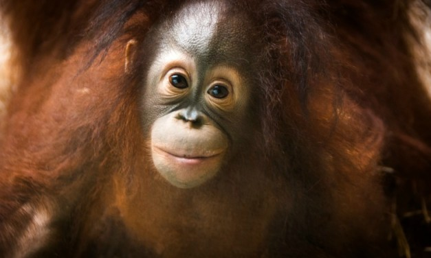 Conservation Lessons for Families at the Houston Zoo