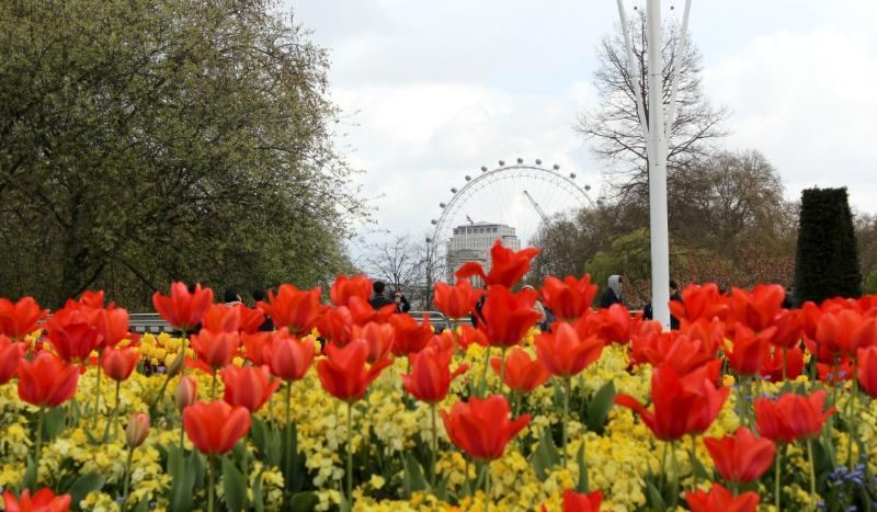 easy tips for getting around London Flowers