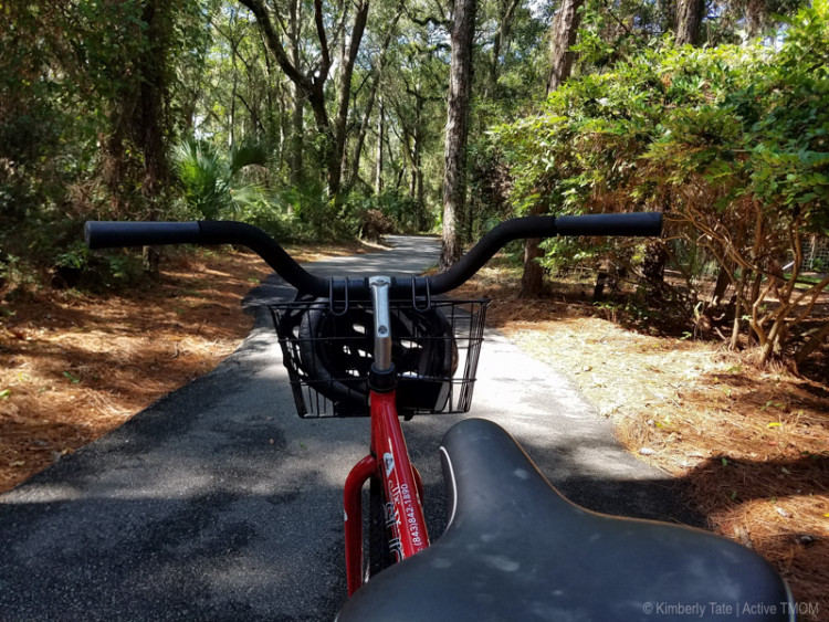 The Lowcountry of South Carolina begs for one to go explore. Wide, shading trees covered in moss, winding waterways, and unique animals all await you!