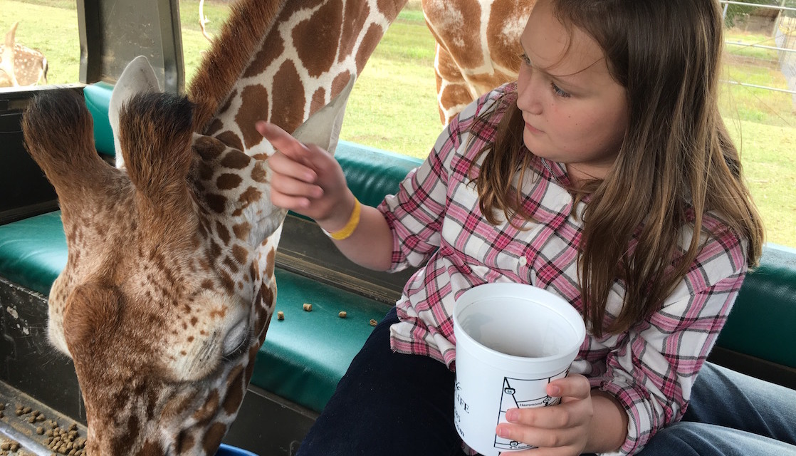Fascinating Adventures at the Global Wildlife Center