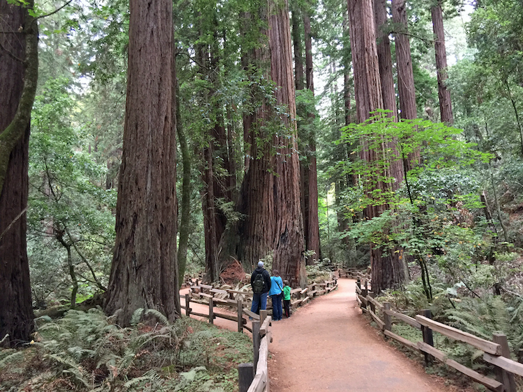Muir Woods is a must visit during Multigenerational Adventures in San Francisco