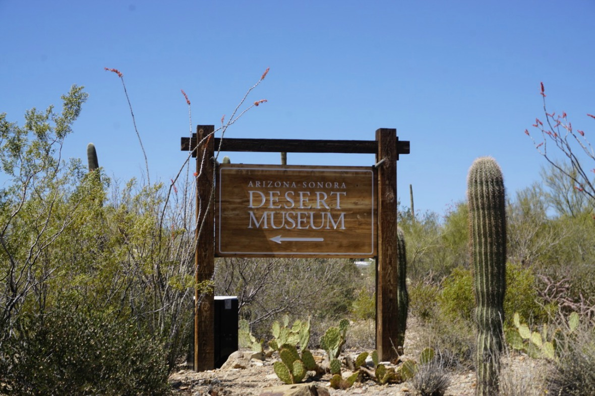 Things To Do With Kids In Tucson Spend A Day At The Arizona Sonora Desert Museum Traveling Mom