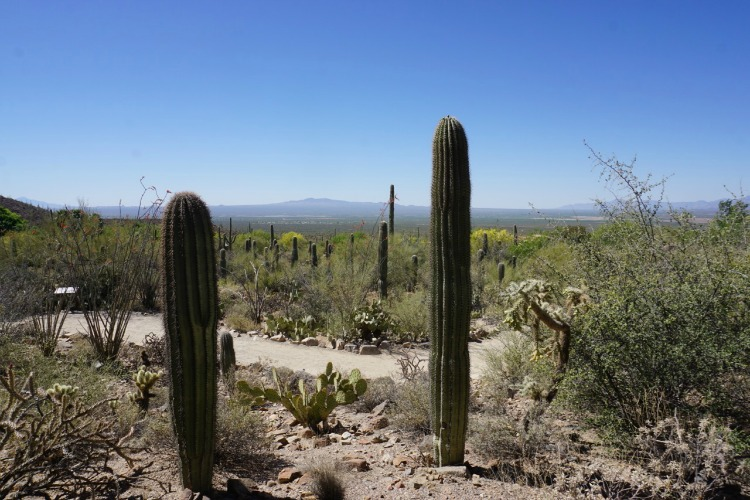 The Desert Loop Trail is another way to spend the day at the Arizona-Sonora Desert Museum. Photo by Multidimensional TravelingMom, Kristi Mehes.