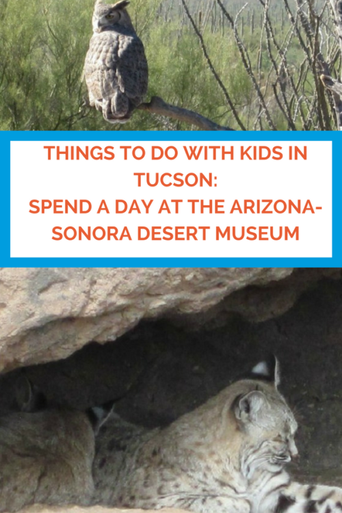 Best Things to Do With Kids in Tucson: Spend a Day at the Arizona-Sonora Desert Museum. Photo by Multidimensional TravelingMom, Kristi Mehes.