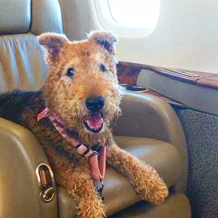 are pets allowed when flying by private jet