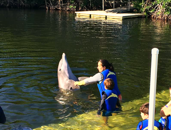 Shacking hands with a dolphin.