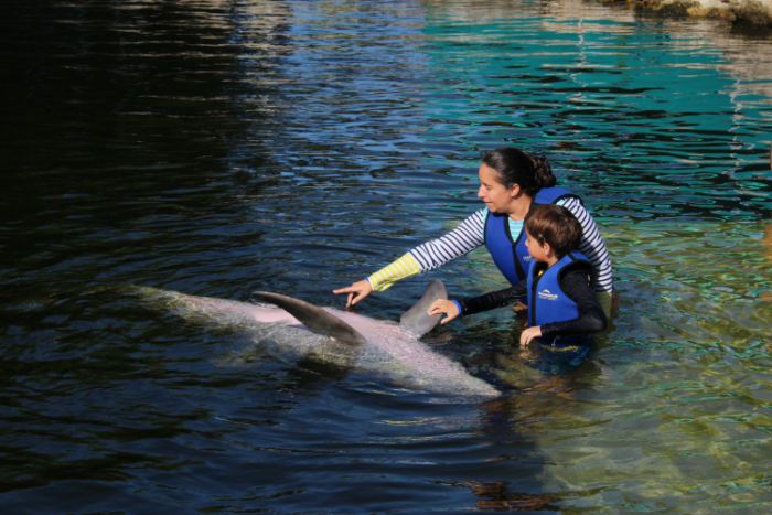 Touching a dolphin at Dolphins Plus in Key Largo.