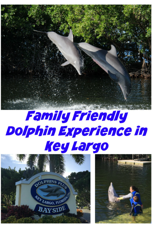 Do your kids want to go swimming with dolphins? Dolphins Plus in Key Largo Florida offers a family friendly experience that was just right for this 8-year-old's birthday.