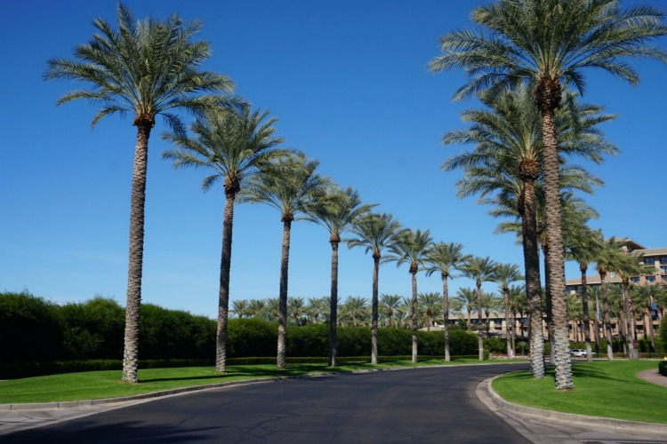 Rows of palm trees greet you as you arrive at the Westin Kierland. Below are 7 reasons it's a family friendly resort in Arizona. Photo by Multidimensional TravelingMom, Kristi Mehes.