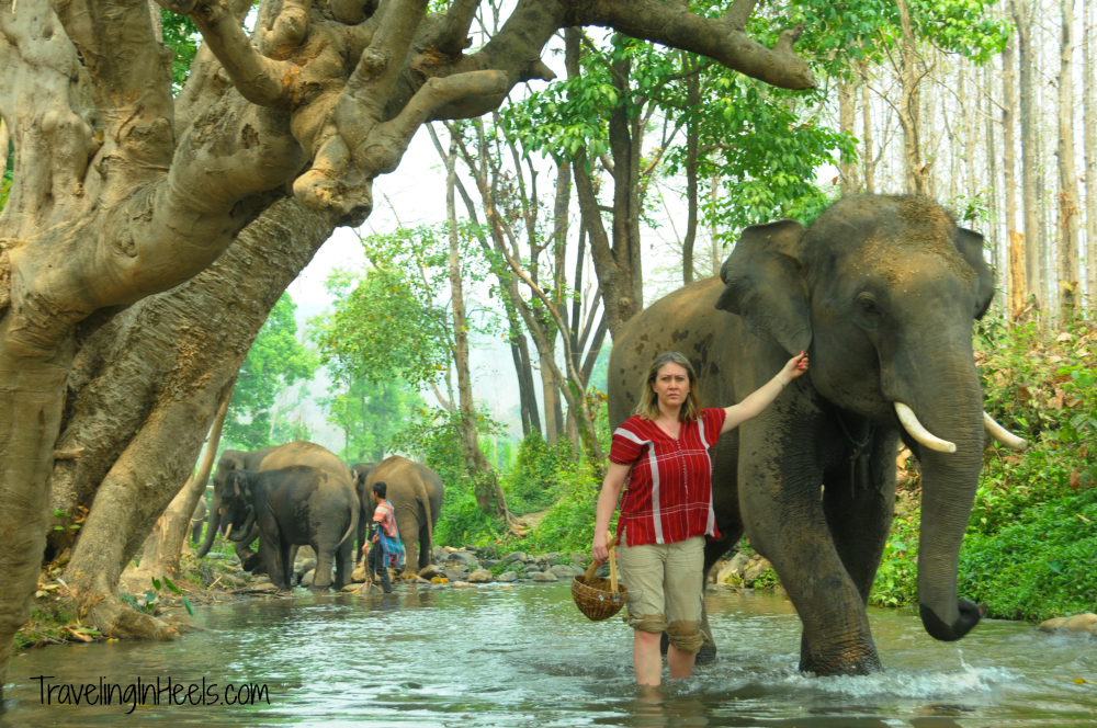 Traveling Solo in Thailand experience included Elephant Trainer for a day at Pataras Elephant Farm.