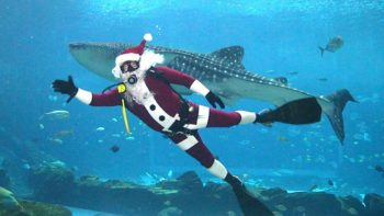 Holidays in Atlanta include a visit to Georgia Aquarium Scuba Claus