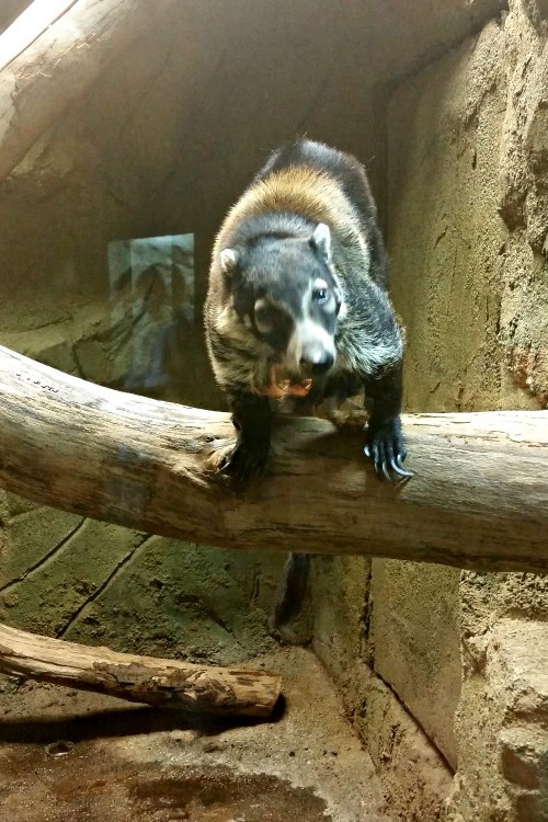 Rainforest Adventures in Sevierville, TN houses many varities of exotic animals.