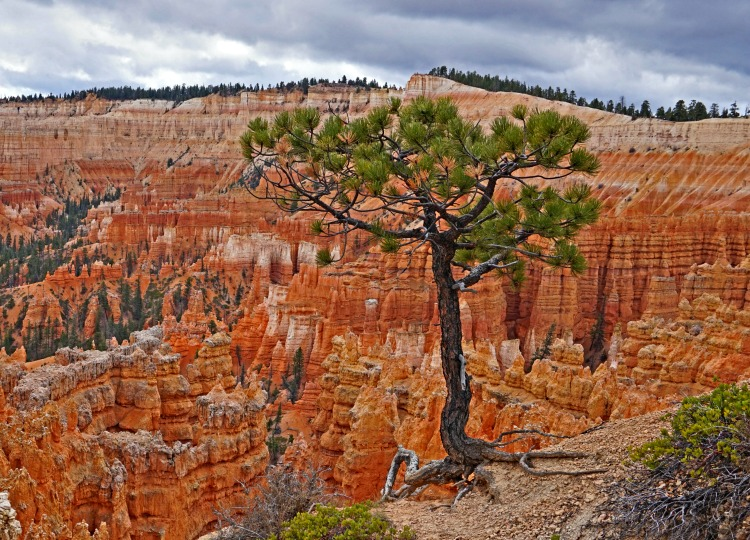 Planning a trip to Bryce Canyon. Living on the edge.