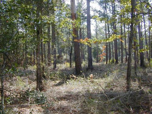 The Big Thicket National Preserve, a favorite spot among Texas national parks.