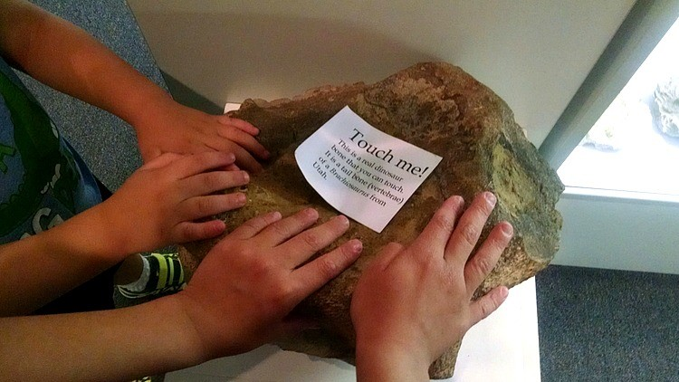 Brachiosaurus vertebrae discovered in Utah on display at the Earth Experience Museum