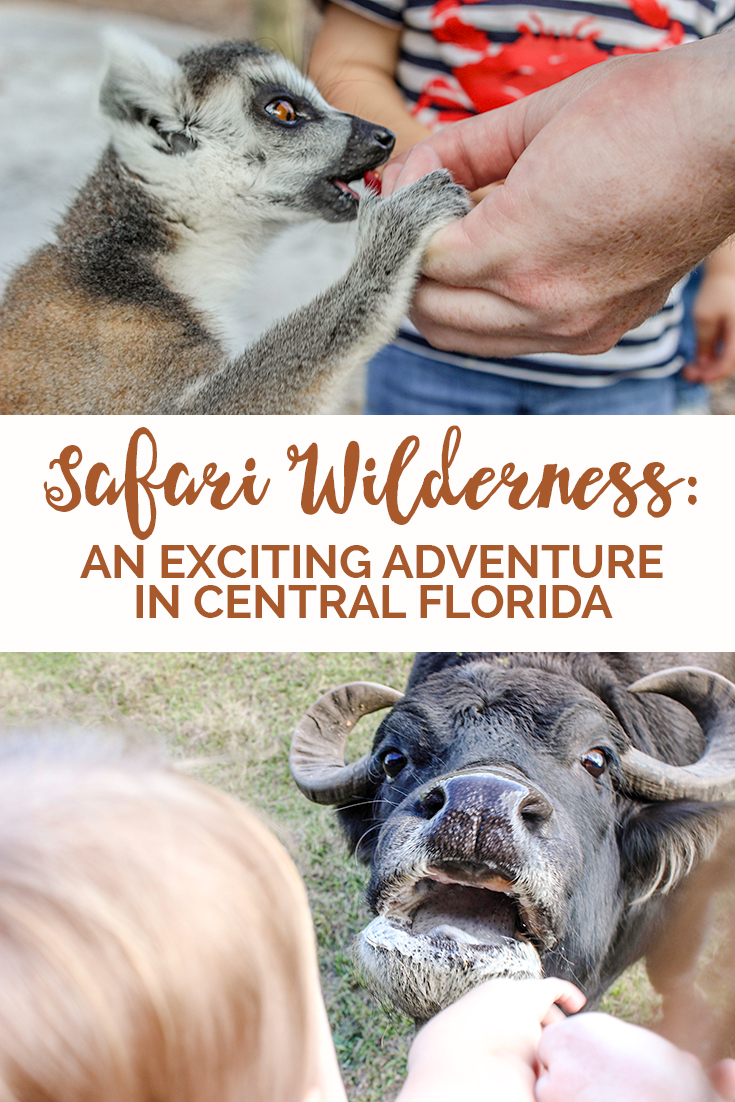 There's more to do in Florida than theme parks and beaches. Safari Wilderness, located only 45 minutes away from Disney World, will change your mind!