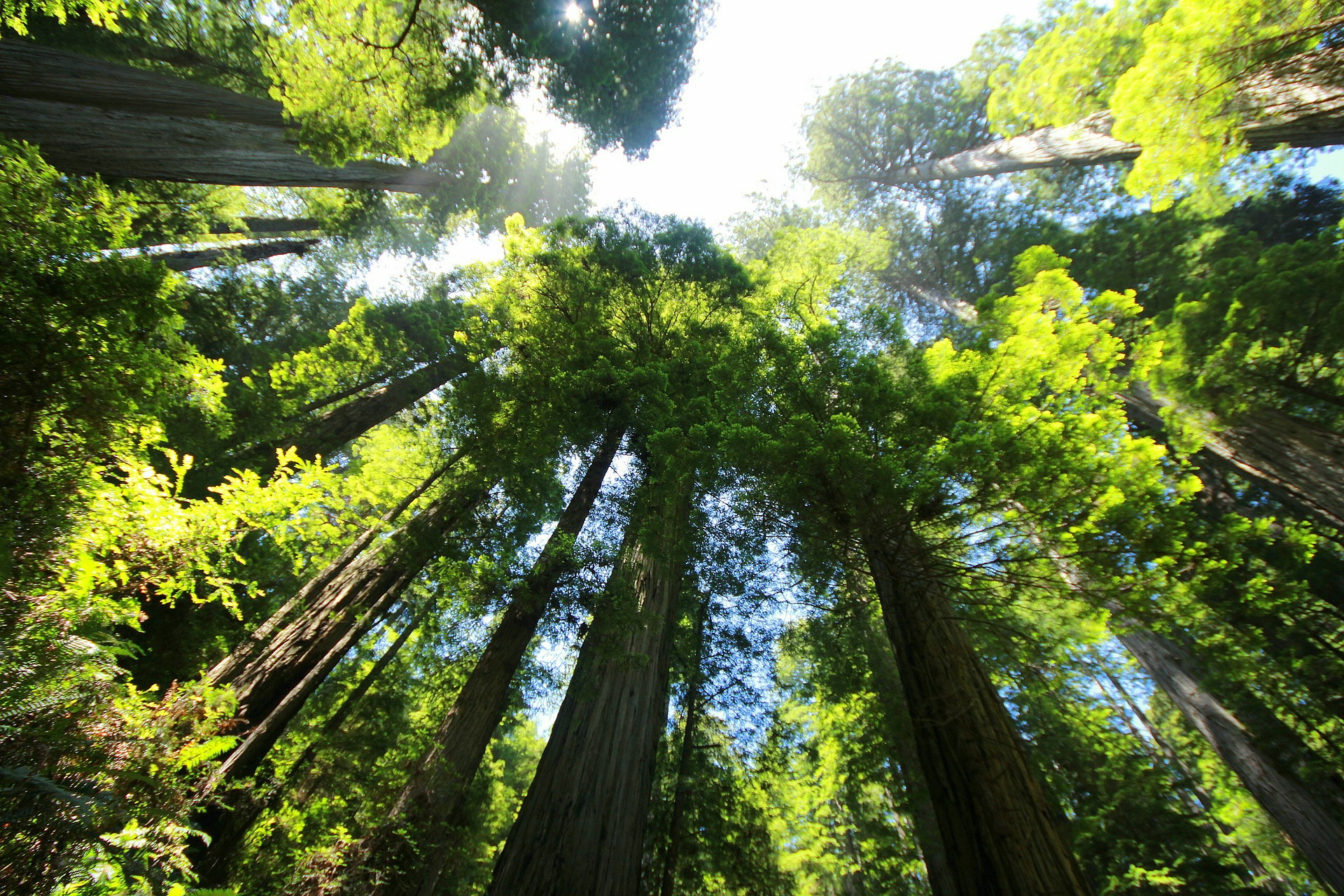 What happens we we lost a natural wonder like a Giant Sequoia tree.