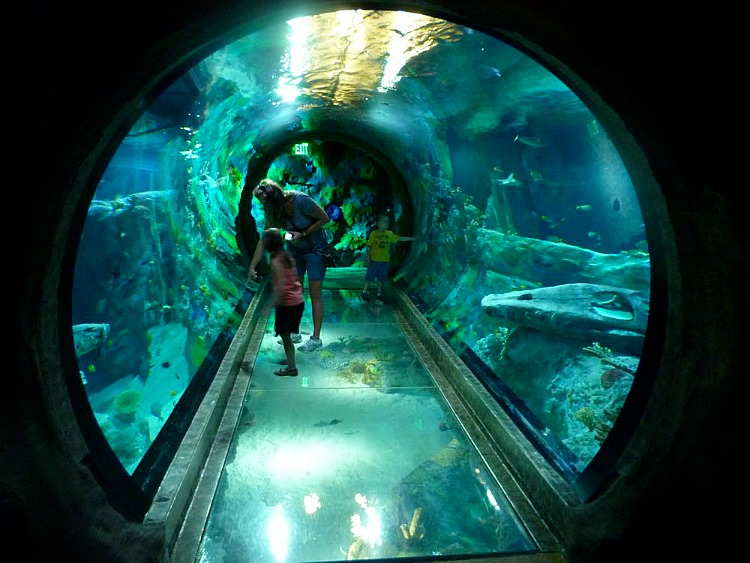 Looking for things to do in Grapevine? SEALIFE Aquarium is fun the whole family!