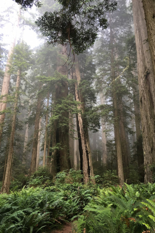 Redwoods National Park offers a top teen destination.