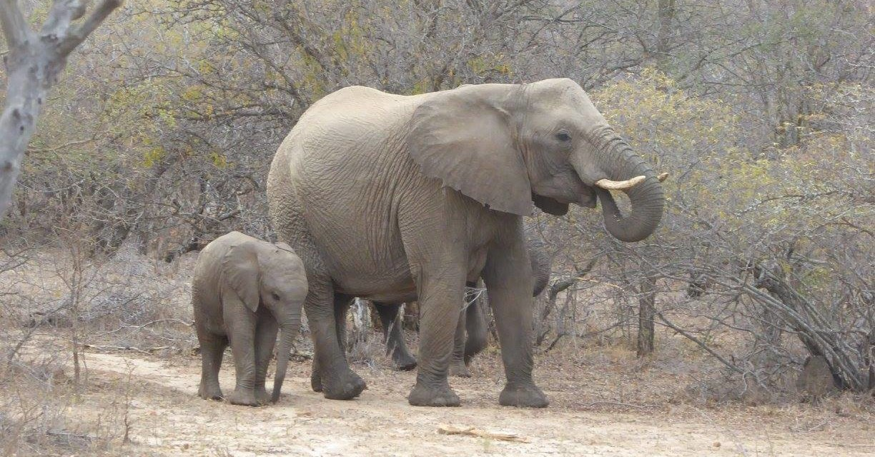 South Africa: an Unforgettable Multi-Generation Family Vacation
