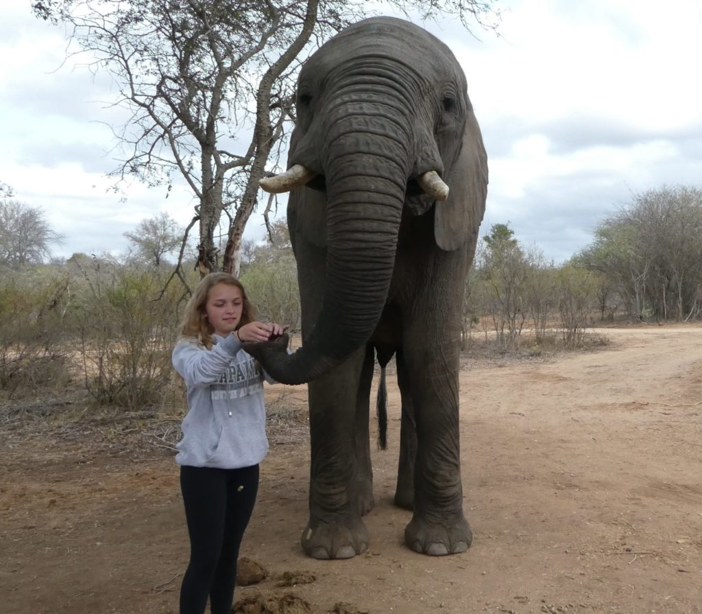 Interacting with elephants in South Africa.