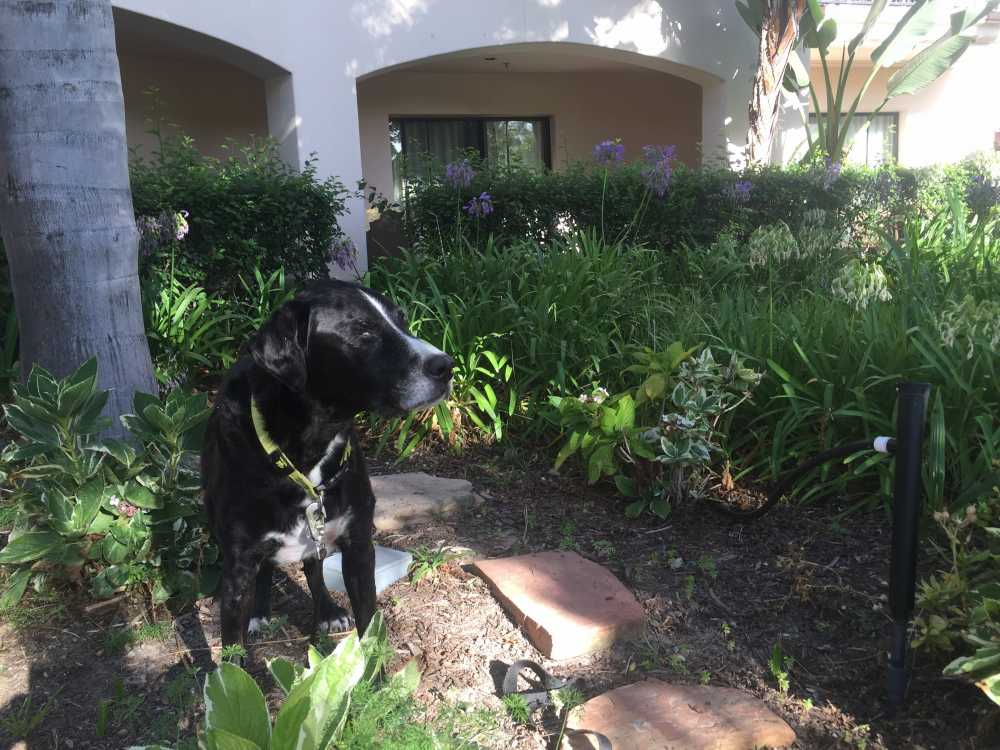 Fess Parker Resort is a luxury property in Santa Barbara that welcomes families and dogs.