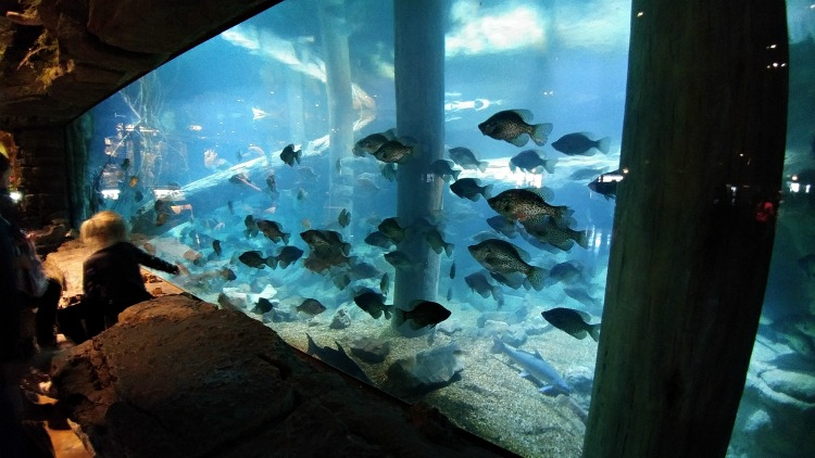 giant indoor fish aquarium