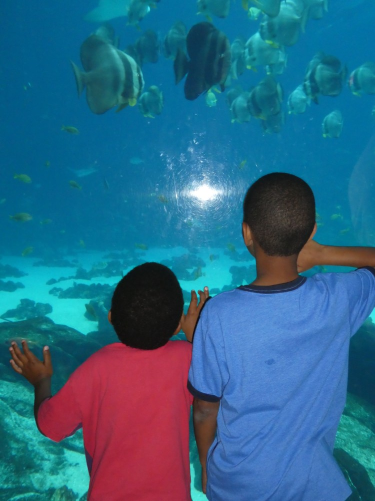 Look for special discounts for parents at the Georgia Aquarium one of the most popular indoor Atlanta attractions for kids.