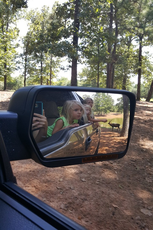Cherokee Trace drive-thru safari, a family friendly East Texas day trip.
