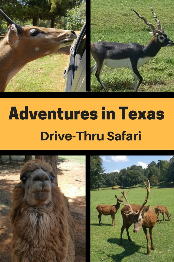 Experience this family-friendly, wildlife adventure at Cherokee Trace, an East Texas day trip.