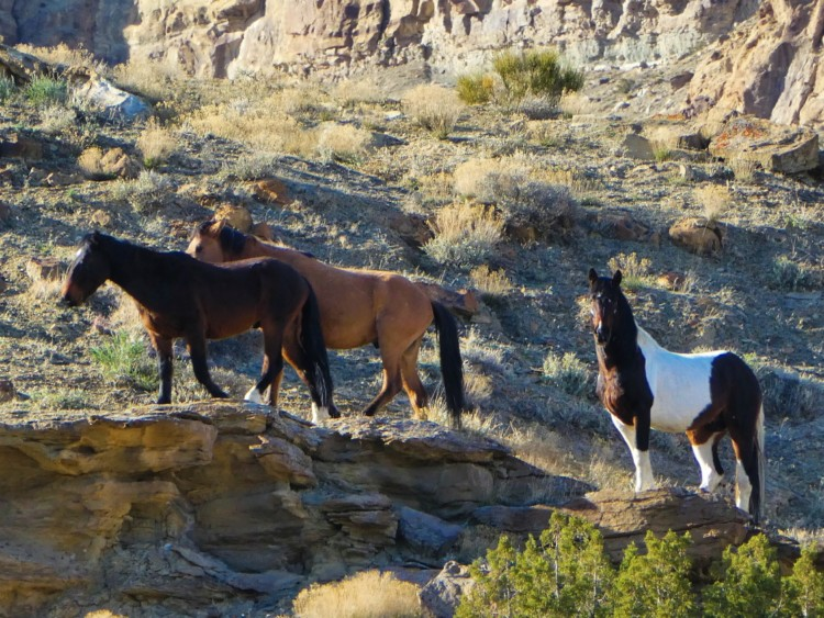 Colorado Little Bookcliffs Wild Horses area is a fun free activity for families. Hiking trails are open year round.
