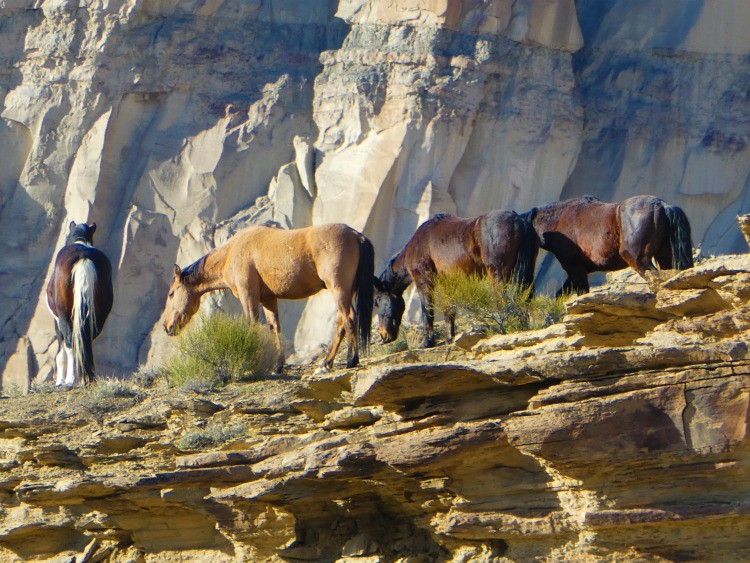 Colorado Little Bookcliffs Wild Horse Area is a fun free activity for families. Hiking trails are open year round.