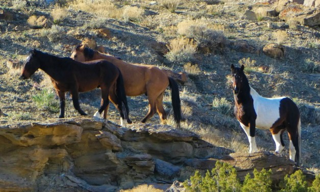 Where to See Colorado's Wild Horses