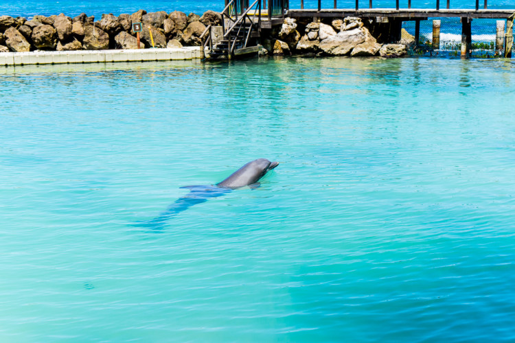 dolphin cove jamaica with young kids family travel tips. Black Bedroom Furniture Sets. Home Design Ideas