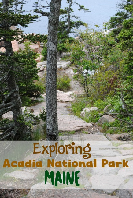 Heading to Acadia National Park in Maine with the family but not sure where to begin? Here's easy tips for visiting Acadia National Park with kids!