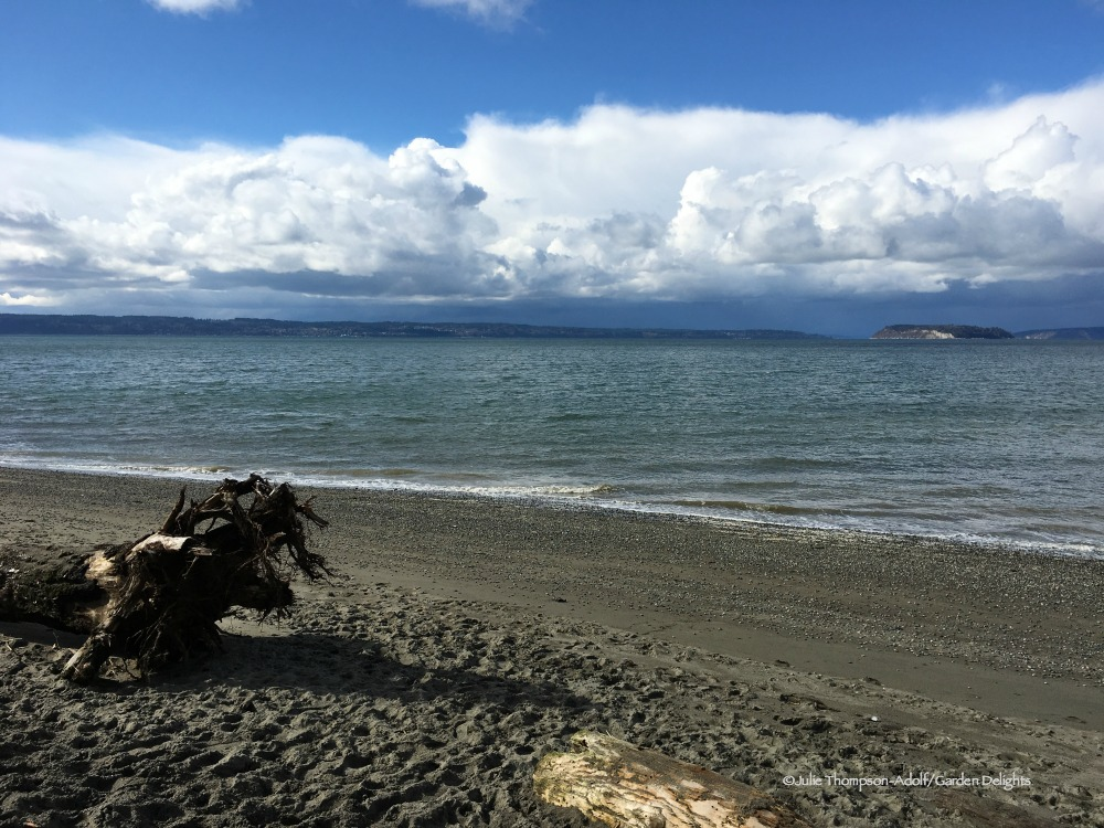 Things to Do in Seattle Washington Howarth Park Beach
