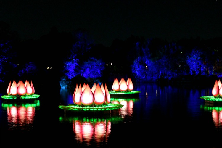 Rivers Of Light is a must-see if you visit Animal Kingdom at night