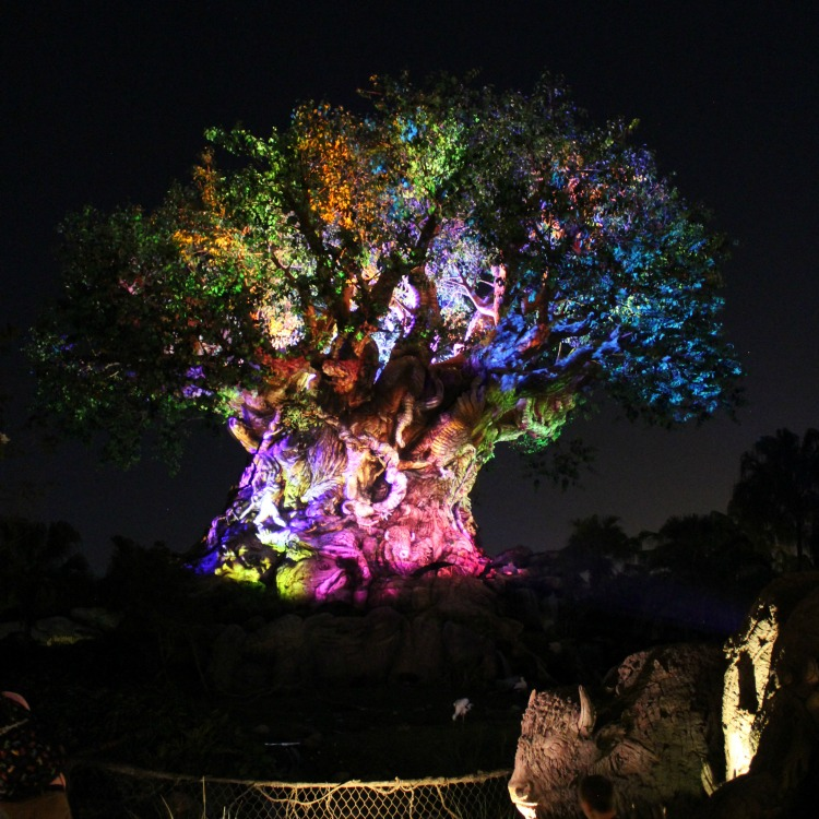 It's worth a visit to Animal Kingdom at night to see the Tree Of Life beautifully lit