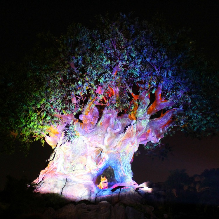 With new after dark attractions and stunning nighttime shows, find out why you can't miss visiting Disney's Animal Kingdom at night.