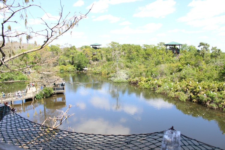 The observation tower gives you a great view of the breeding marsh