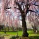 Enjoy cherry blossoms in Philadelphia for free at the Horticultural Center