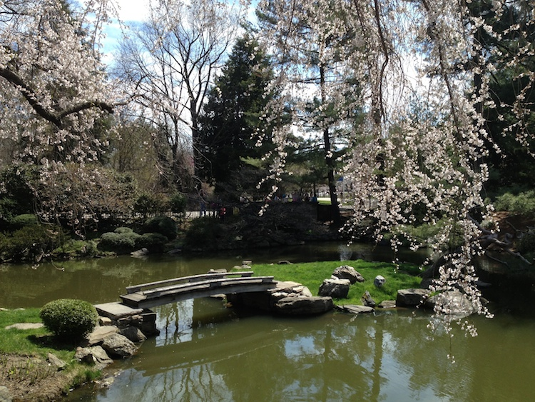 Visit the Japanese House to see cherry blossoms in Philadelphia, along with a koi pond